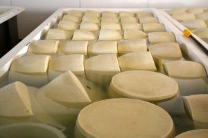 Parmigiano-Reggiano Vacche Rosse in salamoia