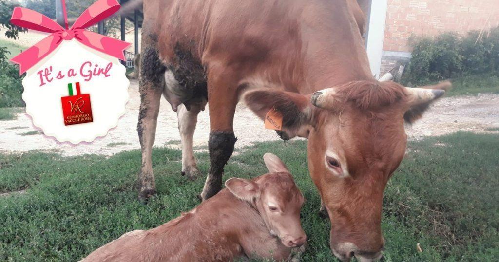Rossella Consorzio Vacche Rosse