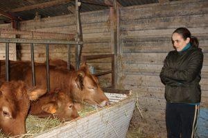 giuliana con le sue vacche rosse
